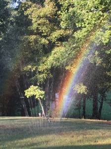 Rainbow in yard